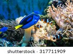 Beautiful Tropical Blue Fish...