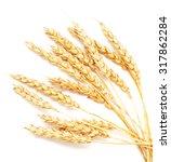 golden wheat isolated on white... | Shutterstock . vector #317862284