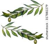 watercolor olive branch | Shutterstock . vector #317882279
