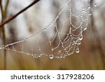 drops on spider net | Shutterstock . vector #317928206