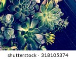 A Group Of Kalanchoe And...