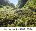 mossy vegetation detail on the... | Shutterstock . vector #318116504
