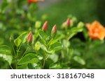 hibiscus flower.   Shutterstock . vector #318167048