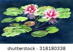 Two Water Lilies With Pads....