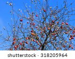 Red Apples On The Apple Tree I...