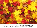 Background Of Fallen Autumn...