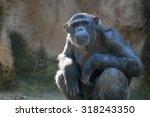 Portrait Of Sitting Monkey....