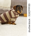 cute dog in hooded jumper at... | Shutterstock . vector #318299930