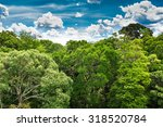 the amazon forest in brazil | Shutterstock . vector #318520784