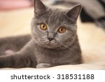 cute kitten playing on the bed. ... | Shutterstock . vector #318531188