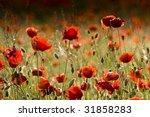 poppies | Shutterstock . vector #31858283