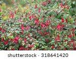 Beautiful Vibrant Fuchsia...