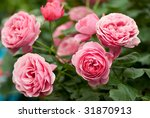 Stock photo pink roses 31870913