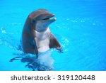 Smiling Dolphin On Tenerife ...