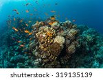 tropical fish on background of... | Shutterstock . vector #319135139