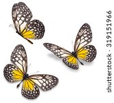 Stock photo beautiful three yellow and white butterfly isolated on white background 319151966