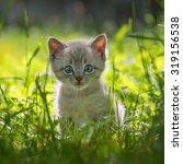 Stock photo kitten on grass close up 319156538