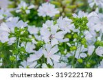 white flowers and a bee | Shutterstock . vector #319222178