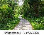 Wonderful Forest Bike Path