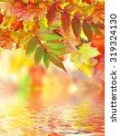 Autumn Foliage. Golden Autumn....