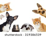 Stock photo set of pet looking 319386539