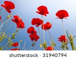 beautiful red poppies on clear blue sky - stock photo