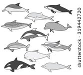 dolphin types vector set.... | Shutterstock .eps vector #319442720