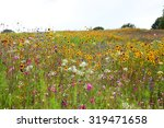 Beautiful Wildflowers In A...