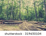 Pile Of Wood In The Forest By...