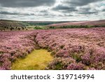Goathland Moor Heather  ...