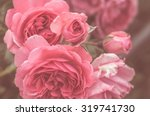 Stock photo roses in the garden 319741730
