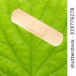 Small photo of Green leaf with adhesive plaster