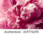 Beautiful Pink Peony Flower...