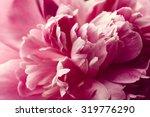 Beautiful Pink Peony Flower...