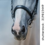 Muzzle Of Grey Horse With Whit...