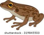 Brown Frog Vector Illustration