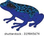 Poison Dart Frog   Vector...