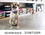 Stock photo happy dog in pet store 319871009