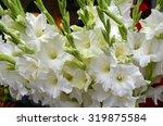 Beautiful White Gladiola Flora...