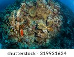 tropical fish on background of... | Shutterstock . vector #319931624