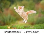 Stock photo funny red cat flying in the air in autumn 319985324