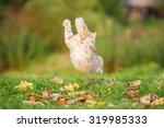 Stock photo funny cat playing outdoors in autumn 319985333