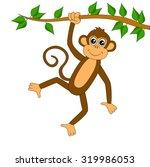 Funny Monkey On White...