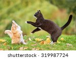 Two Cats Playing In Autumn