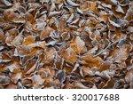 Autumn Morning Iced Leaf...
