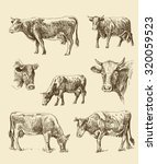 vector seamless cows hand draw... | Shutterstock .eps vector #320059523