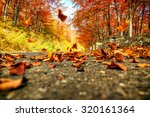 road in autumn beech landscape... | Shutterstock . vector #320161364