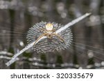 close up macro of spider on web. | Shutterstock . vector #320335679