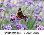 Stock photo butterfly on purple flowers in the sunlight 320342009