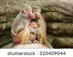 two female hamadryas baboons... | Shutterstock . vector #320409044